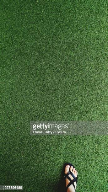 low section of woman standing on grass - chichester stock pictures, royalty-free photos & images
