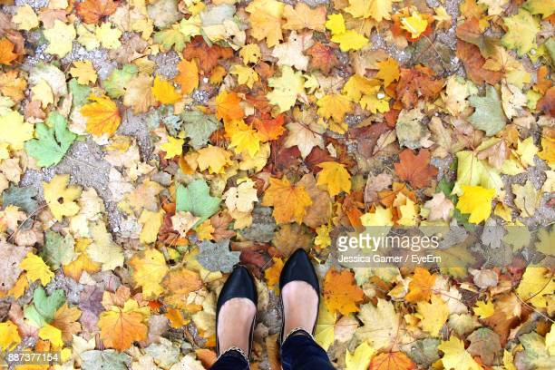 Low Section Of Woman Standing On Maple Leaves