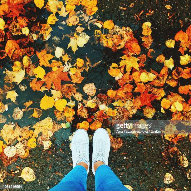 Low Section Of Woman Standing On Road Covered With Autumn Leaves