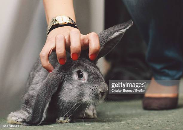 Low Section Of Woman Stroking Rabbit On Floor