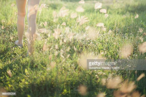 low section of woman walking on grassy field - 人の脚 ストックフォトと画像