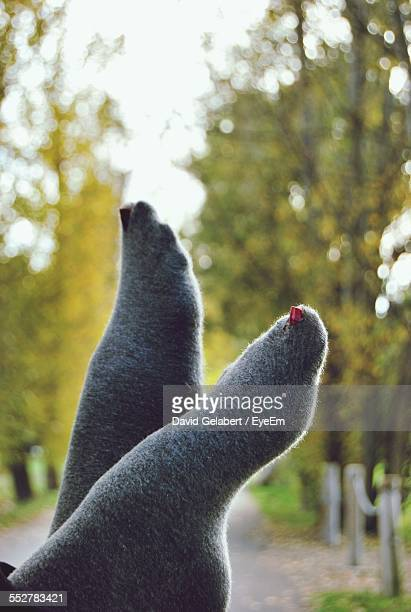 Low Section Of Woman Wearing Socks Outdoors