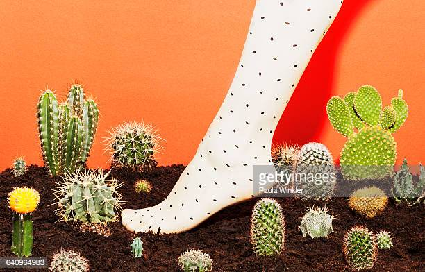 Low section of woman wearing stockings while standing amidst cactus plants