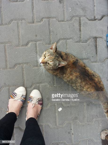 Low Section Of Woman With Cat Standing On Street