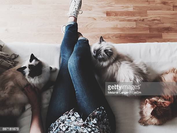 low section of woman with cats at home - three animals stock pictures, royalty-free photos & images