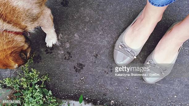 Low Section Of Woman With Dog On Street