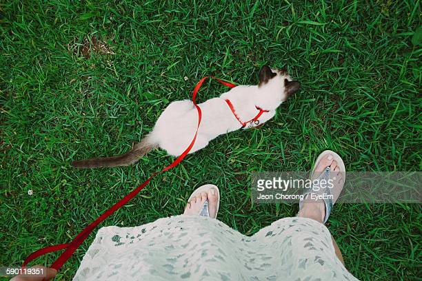 Low Section Of Woman With Siamese Cat On Grassy Field