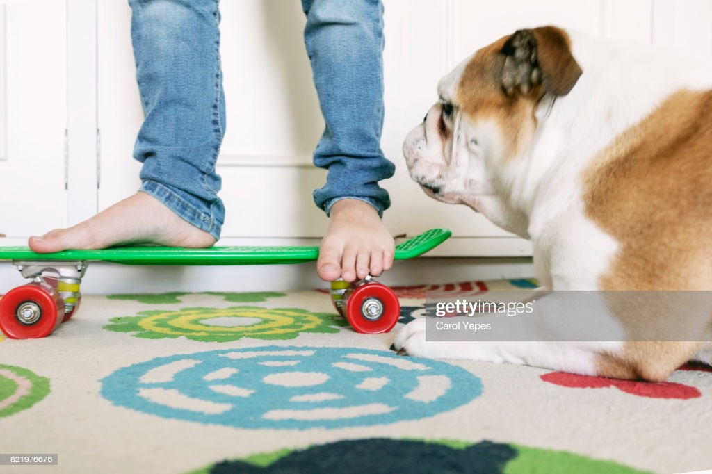 low section  of young boy skateboarding at home with dog : Stock Photo