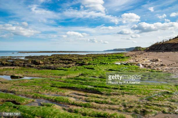 low tide at cornelian bay, scarborough, north yorkshire - scarborough uk stock pictures, royalty-free photos & images