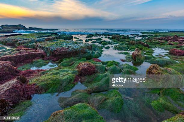 low tide at la jolla san diego california - low tide stock pictures, royalty-free photos & images