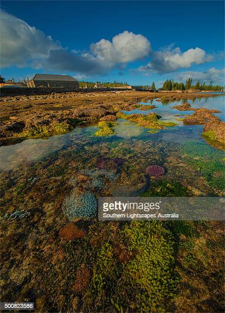 Low tide exposes the coral reef in Slaughter bay, at Kingston, Norfolk Island.