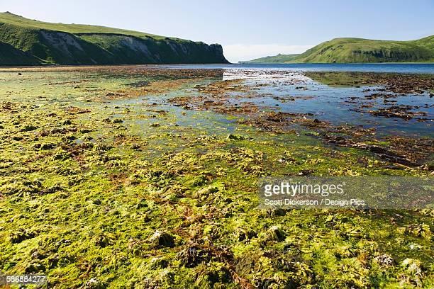 low tide in isanotski strait - aleutian islands ストックフォトと画像