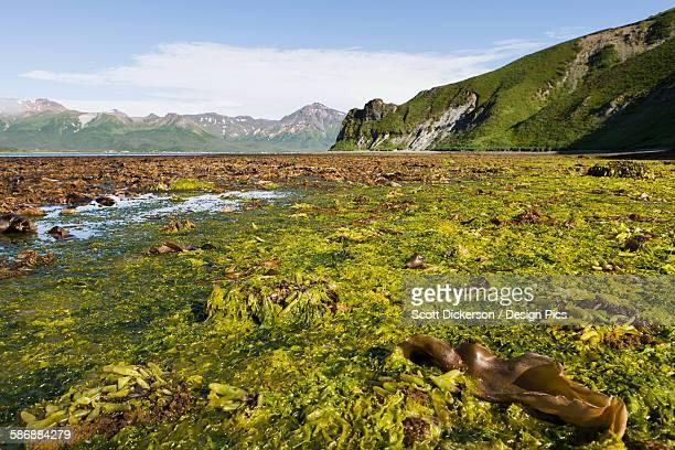 Low Tide In Isanotski Strait