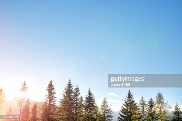 Low tree line with expanse of sky and sun flare