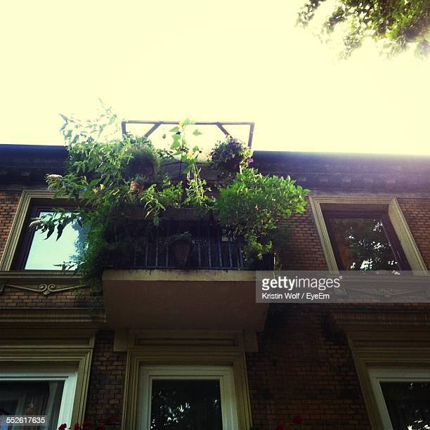 Low-Angle View Of Balcony With Potted Plants