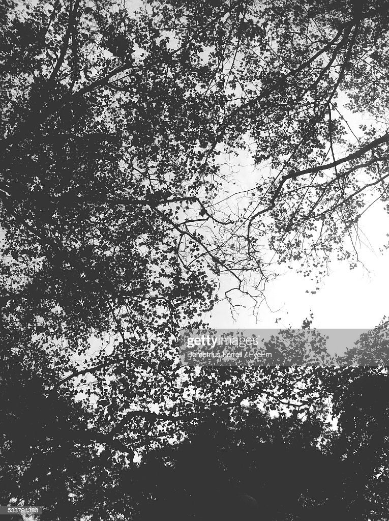Low-Angle View Of Silhouetted Tree : Foto stock