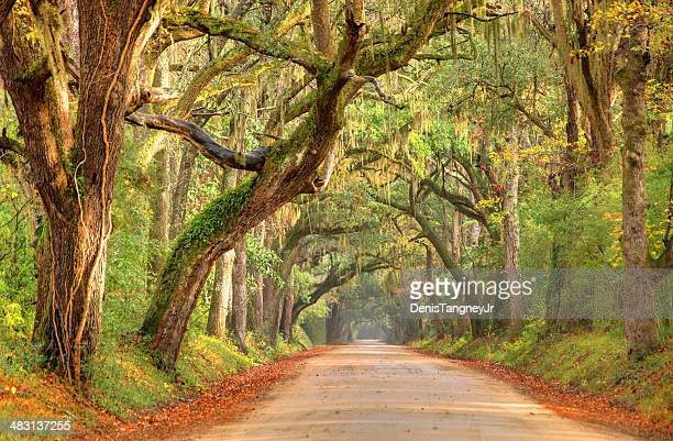 lowcountry road near charleston, south carolina - south carolina stock pictures, royalty-free photos & images