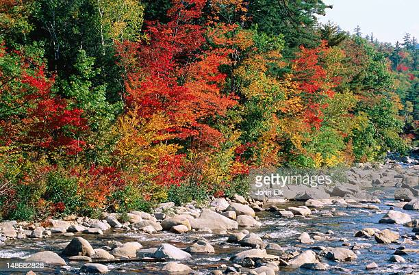 lower falls scenic area, swift river, kancamagus highway. - swift river stock photos and pictures