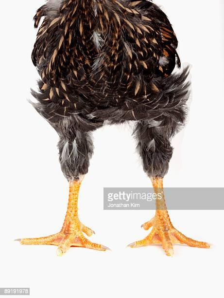 Lower half of a chicken