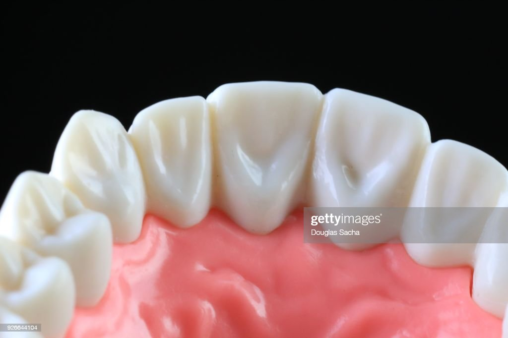 Lower Jaw Of Human Teeth Stock Photo Getty Images