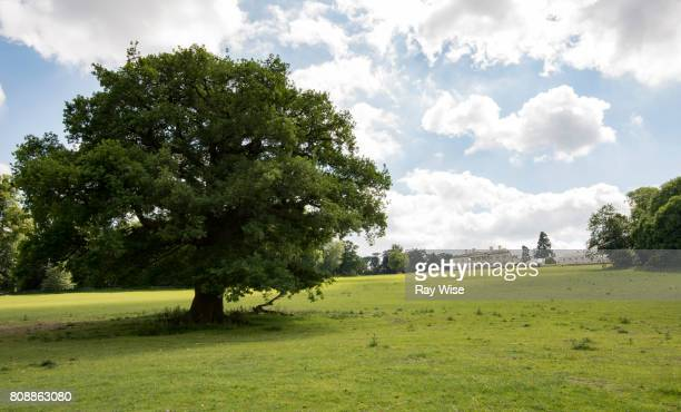 lower park amersham looking up to shardeloes house on a hill. - アマシャム ストックフォトと画像