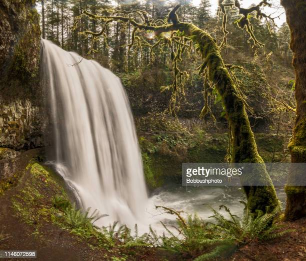 lower south falls at silver falls state park - state park stock pictures, royalty-free photos & images
