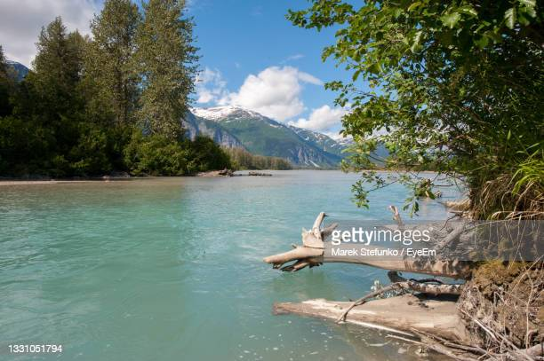 lower stikine river - marek stefunko stock pictures, royalty-free photos & images