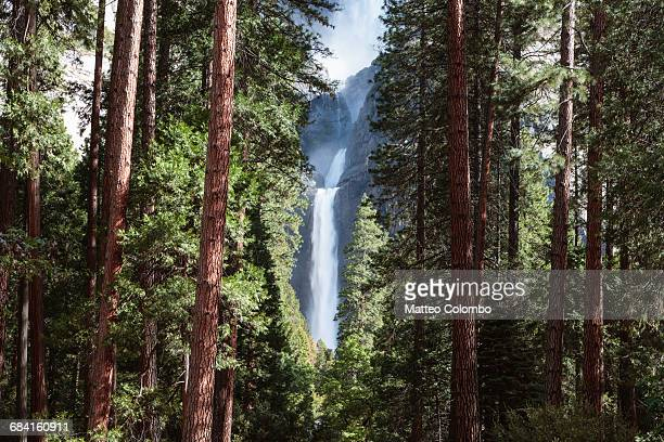lower yosemite fall and forest, yosemite np, usa - yosemite nationalpark stock pictures, royalty-free photos & images