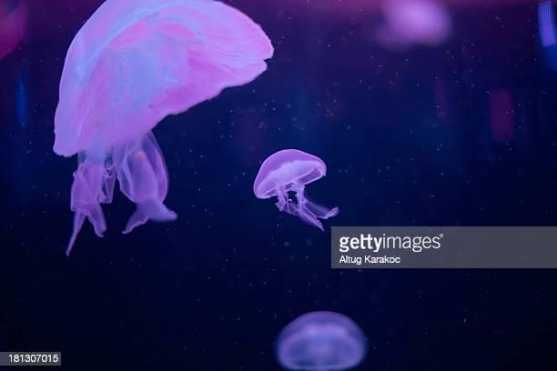 lowlight jellyfish - altug karakoc - fotografias e filmes do acervo