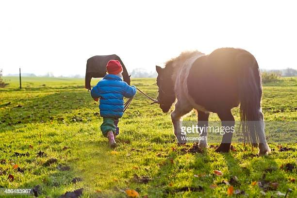 Lttle girl with pony on a meadow