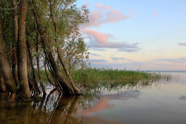 Lubana lake 1