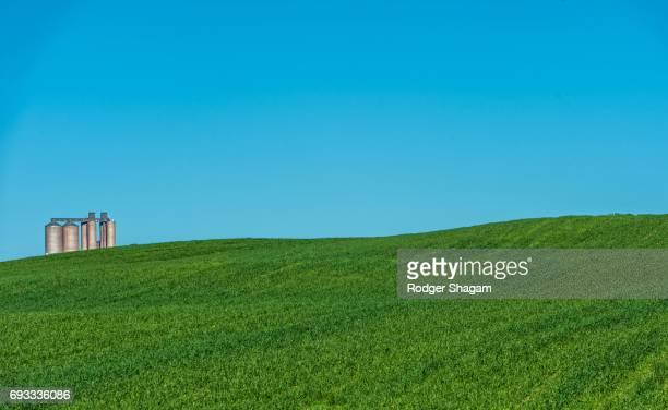 Lucerne (alfalfa) and silos