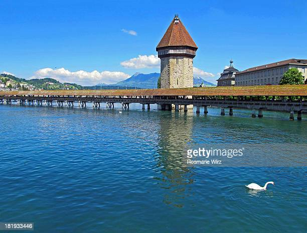lucerne chapel bridge - freshwater bird stock photos and pictures