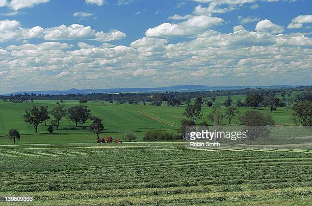 Lucerne crop for baling, Young district, NSW