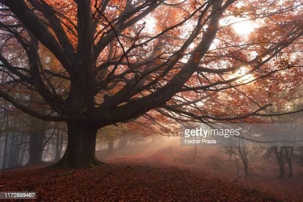 luces del bosque - アラバ県 ストックフォトと画像