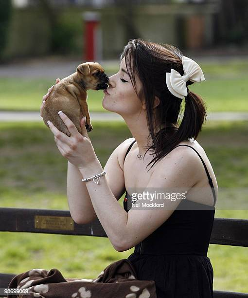 Lucie Jones sighted taking her new dog 'Boo' part Chihuahua part Pug for it's first walk outdoors on April 27 2010 in London England