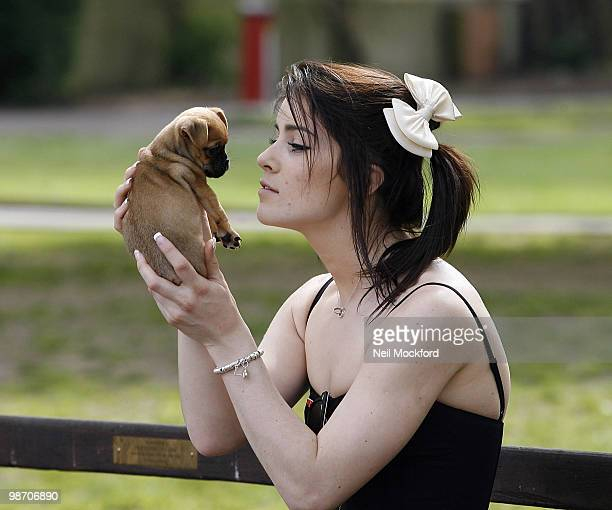LONDON UNITED KINGDOM APRIL 27 Lucie Jones sighted taking her new dog 'Boo' part Chihuahua part Pug for its first walk outdoors on April 27 2010 in...