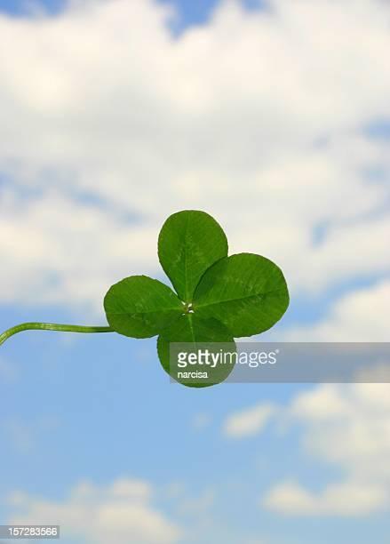 mehr glück - 4 leaf clover stock-fotos und bilder