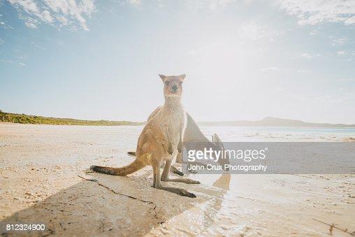 lucky bay wildlife