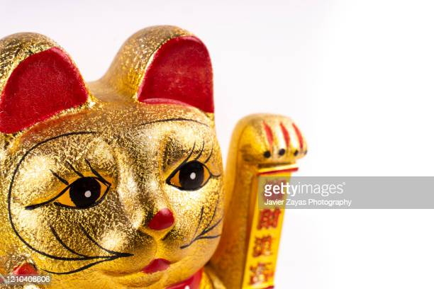 lucky cat against white background - prosperity stock pictures, royalty-free photos & images