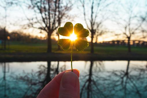 Lucky charm magic four-leaf clover 1191635117