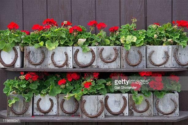 Lucky flower box