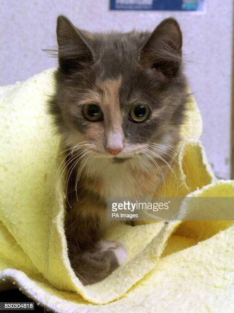 Lucky kitten Biscuit who clung to the engine of a lorry for nearly 80 miles in freezing temperatures after climbing into the engine compartment to...