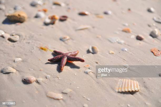 lucky star on the beach - siesta key stock pictures, royalty-free photos & images