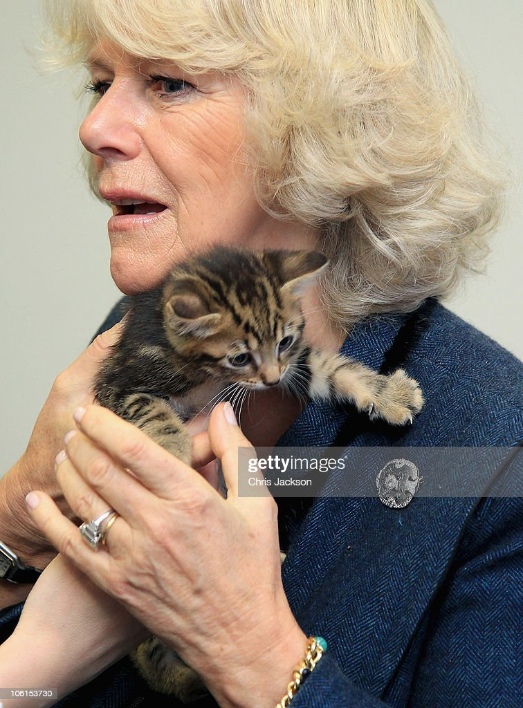Duchess Of Cornwall Opens New Cattery At Battersea Dogs Home : News Photo