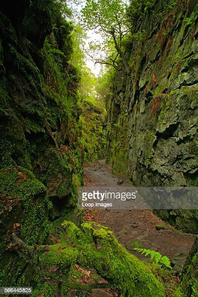 Lud's church in a natural cleft in the rock hidden deep in a wood known as the Black Forest It was used as a place of worship in the 15th century by...