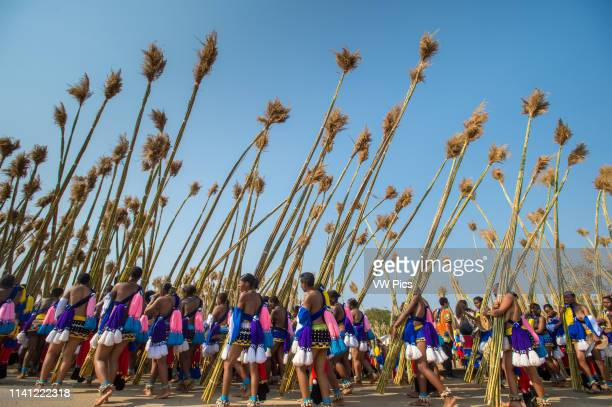 Ludzidzini Swaziland Africa Umhlanga reed dance ceremony Maidens present cut reeds to the queen mother of Swaziland for her Kraal