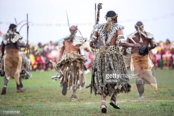 Ludzidzini Swaziland Africa Umhlanga reed dance ceremony Maidens dance before King Mswati III on day 7 of the ceremony