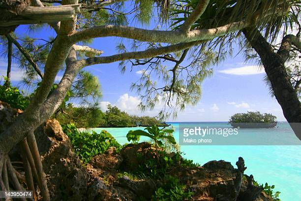 luengoni beach - new caledonia stock photos and pictures