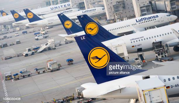 Lufthansa airplanes parked at gates early in the morning at the airport inFrankfurt am Main, Germany, 19 March 2015. Already on Wednesday, 18 March...